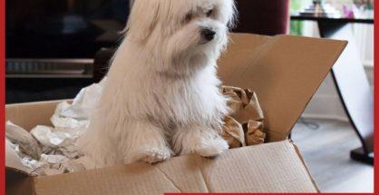 Pet Relocation Company